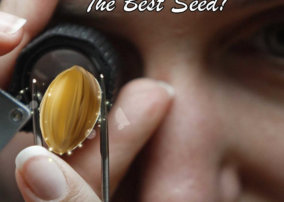What are the best marijuana seeds to start your cannabis grow?